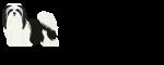 Havanese Dog logo