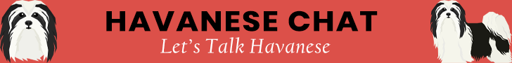 Havanese Chat Banner Ad
